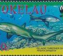 Tokelau 2002 WWF Pelagic Thresher Shark