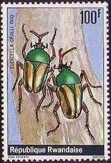 Rwanda 1978 Beetles g