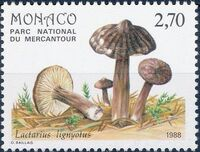 Monaco 1988 Fungi in Mercantour National Park d
