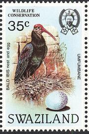 Swaziland 1984 WWF Southern Bald Ibis e