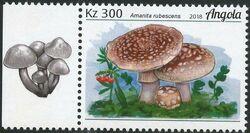 Angola 2018 Wildlife of Angola - Mushrooms b