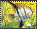 Azerbaijan 2002 Aquarian Fishes c.jpg