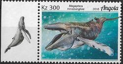 Angola 2018 Wildlife of Angola - Whales b