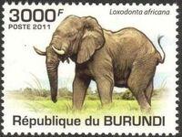 Burundi 2011 Elephants of the African Savanna k