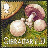 Gibraltar 2003 Mushrooms of Gibraltar d
