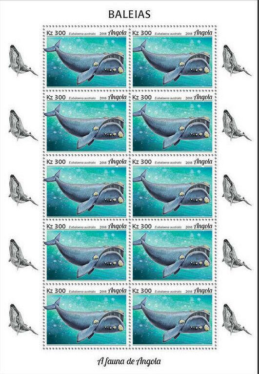 Angola 2018 Wildlife of Angola - Whales Sc