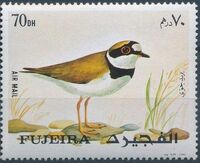 Fujeira 1971 European birds b