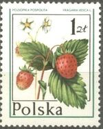 Poland 1977 Forest Fruits c