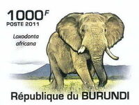 Burundi 2011 Elephants of the African Savanna e