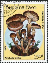 Burkina Faso 1985 Fungi f