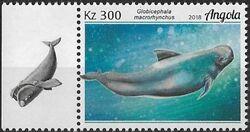 Angola 2018 Wildlife of Angola - Whales a