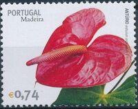 Madeira 2006 Madeira Flowers d