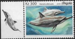 Angola 2018 Wildlife of Angola - Dolphins d