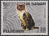 Fujeira 1967 Cats h