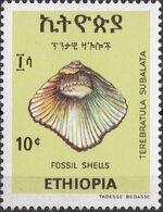 Ethiopia 1977 Fossil Shells b