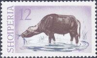 Albania 1965 Water Buffalo e