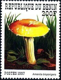 Benin 1997 Mushrooms c