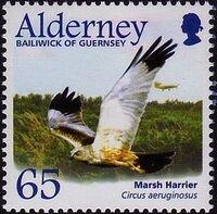 Alderney 2002 Migrating Birds Part 1 Raptors f