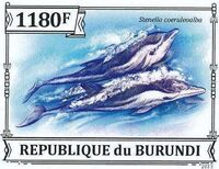Burundi 2013 Dolphins j