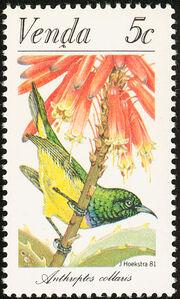 Venda 1981Sunbirds a