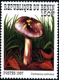 Benin 1997 Mushrooms b