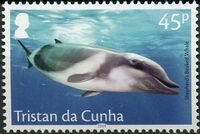 Tristan da Cunha 2019 Marine Mammals a