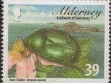 Alderney 2013 Alderney Beetles