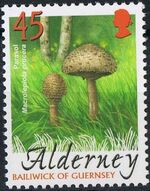 Alderney 2004 Mushrooms e