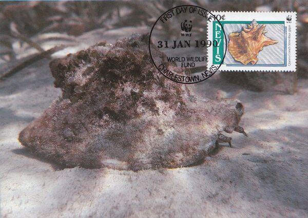 Nevis 1990 WWF Queen Conchs (Strombus gigas) MCa