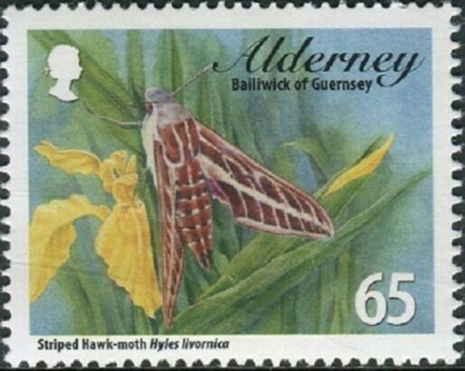Alderney 2011Alderney Hawkmoths e