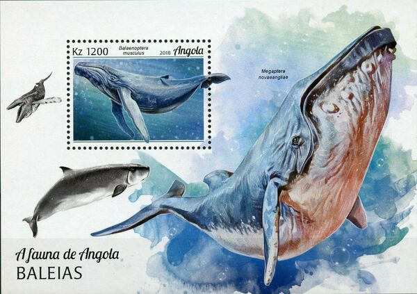 Angola 2018 Wildlife of Angola - Whales SSa