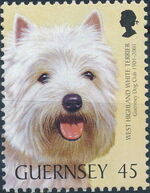 Guernsey 2001 Centenary of Guernsey Dog Club e