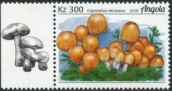 Angola 2018 Wildlife of Angola - Mushrooms c