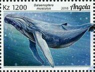 Angola 2018 Wildlife of Angola - Whales e