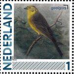 Netherlands 2011 Birds in Netherlands a14