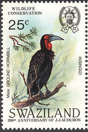 Swaziland 1985 WWF Southern Ground Hornbill (Audubon birth bicentenary) b