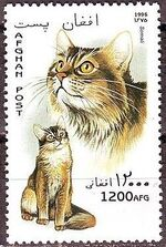 Afghanistan 1996 Cats f