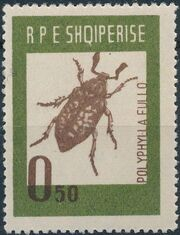 Albania 1963 Insects - Beetles a