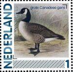 Netherlands 2011 Birds in Netherlands a19