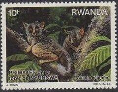 Rwanda 1988 Primates of Nyungwe Forest c