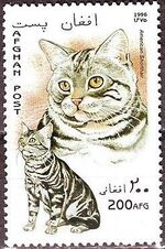 Afghanistan 1996 Cats a