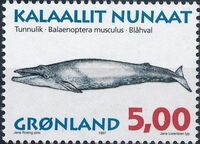Greenland 1997 Whales a