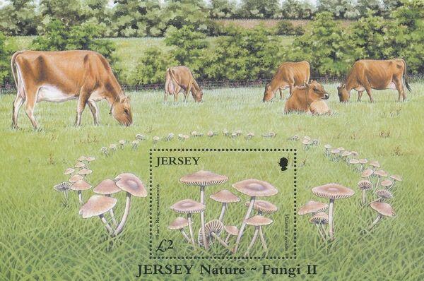 Jersey 2005 Nature - Fungi II g