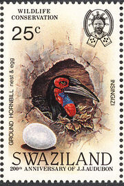 Swaziland 1985 WWF Southern Ground Hornbill (Audubon birth bicentenary) d