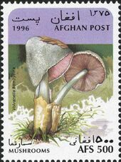 Afghanistan 1996 Mushrooms d