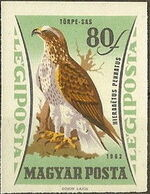 Hungary 1962 65th Anniversary of the Agricultural Museum - Birds of Prey l