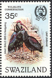 Swaziland 1984 WWF Southern Bald Ibis a