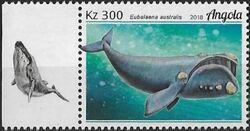 Angola 2018 Wildlife of Angola - Whales c