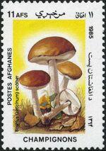 Afghanistan 1985 Mushrooms d
