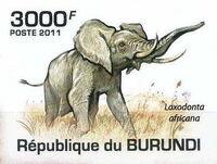 Burundi 2011 Elephants of the African Savanna g